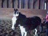 Laura et fifi l'âne