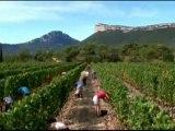 Vendanges & vins en Languedoc-Roussillon