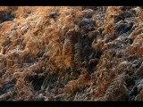 Rêverie d'automne dans les Ardennes