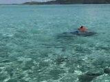 Raies Pastenagues Lagon Bora Bora Polynésie Française