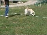 Eytan entraînement cavage le 16 mai 2011