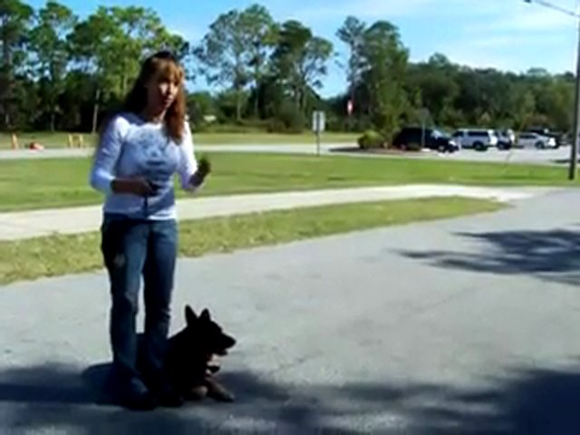 """YouTube – Dog Training Teaching """"kennel"""" W- Dogtra E-collar-Pager Collar"""