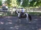 EDUCATION DU CHEVAL  EN EQUITATION AMERICAINE AVEC CHEVAL PAINT HORSE PAR L'EDUCATEUR EQUINS  TONY CLEMENCEAU