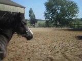 margaux tour honneur cheval