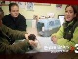 """TV3 - Dimarts, 23.30, a TV3 - La protecció d'animals abandonats, a """"Entre línies"""""""