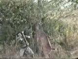 Combat chasseur-cerf