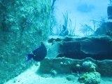Plongée aux Bahamas au large de Nassau - avril 2011-James Bond wreck