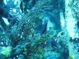 Plongée aux Bahamas au large de Nassau - avril 2011-James Bond wreck-2