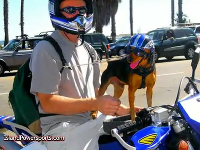 Dogs Who Love Motorcycles