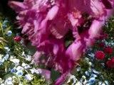 Le printemps sur la Riviera lémanique