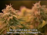 Le syndicat, le march� de l'herbe. (the union the business behind getting high).