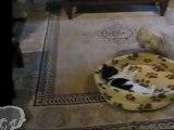 Un chien se fait voler son panier par un chat