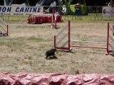 Bambou - STGR Ville sous Anjou - 2eme jour jumping