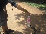 Alex se fait piquer sa bouteille d'eau par un singe à Angkor Vat, Cambodge