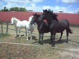Une pouliche! Curiosité des chevaux et poulains. 26/05/2011 SDC10287