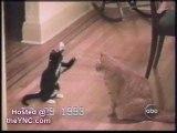 funny cats - drôles de chats