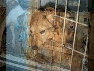 HAYTAP - Hayvan Hakları Federasyonu. Orada Kimse Var mı? yardım için teşekkürler