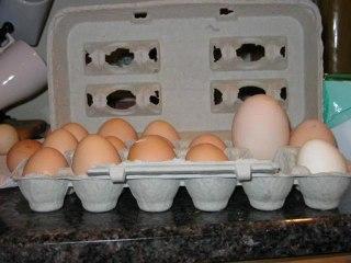 Devasa çift sarılı yumurta