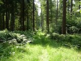 Drangstedter Wald mit Grabhügel