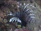 Koh Phi Phi 2011 -  Immersion Totale I