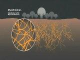 Mycelium Mycorestauration des Champignons
