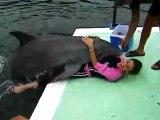 Pappi, was macht der Delfin mit der Frau Fail