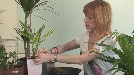 How To Look After House Plants