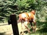 Les chevaux, les animaux les plus fantastiques.. ♥