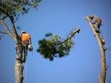 Austin Tree Removal|Austin Tree Trimming|American Treeworks
