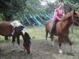 jeux a pied avec les chevaux