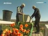 Bilan de l'opération des tulipes contre le cancer (Clermont)