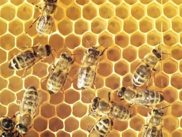 60,000 Bees to Provide Local Restaurant Ingredients