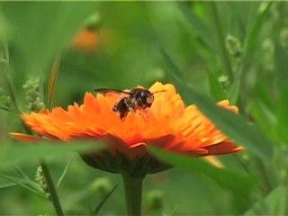 cité-jardinage
