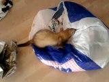 les aventures de skippy est les  sacs poubelles