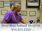 Veterinarian Deerfield Beach, Deerfield Veterinarian, Deerfield Beach Animal Hospital