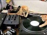 3 Chatons Disk Jockey ► Miaou Mix (lol)