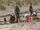 Beached whales die in Scotland