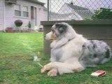 Un  chien qui fume une cigarette ....