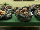 Pérou MACABRE DéCOUVERTE 180 Crânes Humains Retrouvés