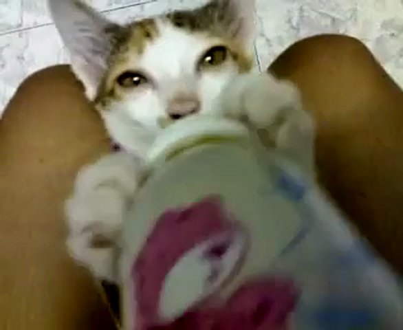 kitty Drinking milk