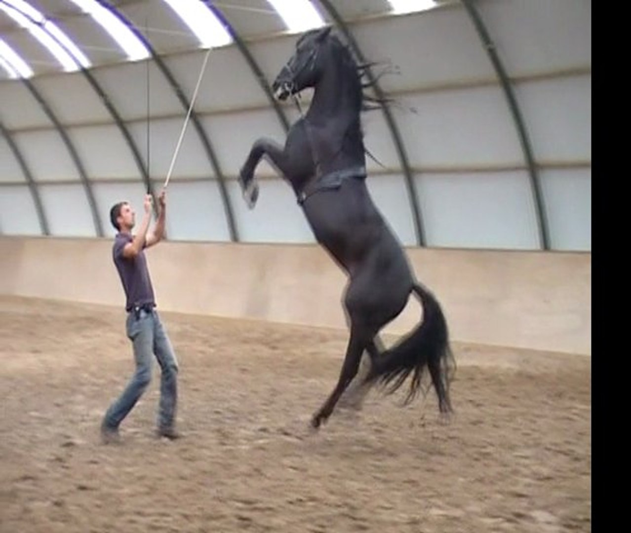 training 3 stallions