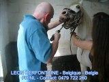 Dentiste équin - Soins des chevaux en Belgique - Léon Cerfontaine: + de 10 ans de métier