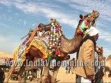 Decorated camel04, Camel festival