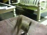 cat cat and cat