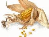 Yvon Etienne : La complainte de la défonce agricole