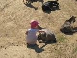 balade au zoo de Peaugres en Ardéche