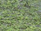 Algues vertes: les agriculteurs jouent au foot sur la plage