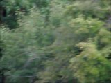 Szarvasbikák / Red deer stags / Cerfs Cerf élaphe / Cervus elaphus