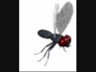 Yvon Etienne : La mouche