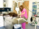 Croton Animal Hospital | Veterinarian Croton on Hudson New York | Putnam County Vets